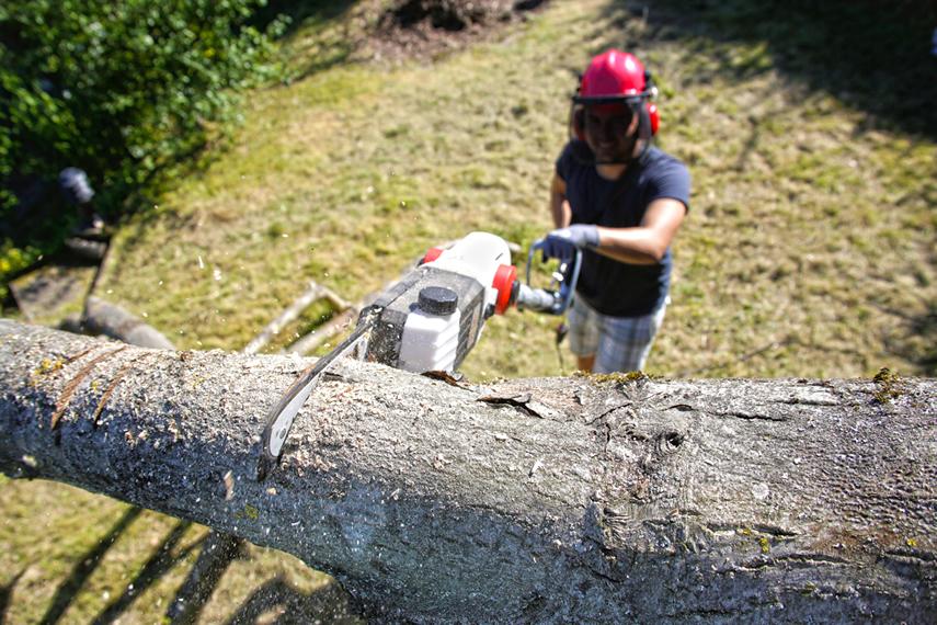 Tipps Zum Obstbaumschnitt Ikra Gartengerate