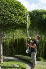 Petrol Multitool Pruner Hedgetrimmer Brushcutter Stringtrimmer PPC 33 TL (4 in 1 Set)