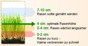 Die ideale Rasenhöhe
